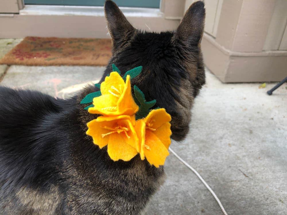 Domingos Com Abas o Mascote Blog, Gato, Maquiagem e Beleza, vol. 548
