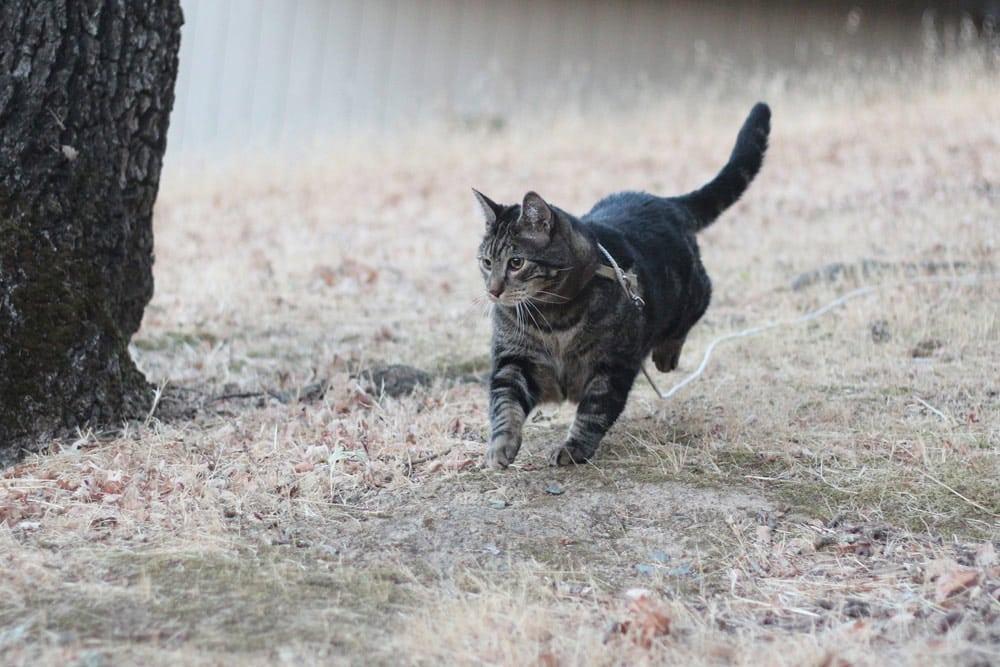 Domingos com abas o gato, maquiagem e beleza Blog Mascot, vol. 594